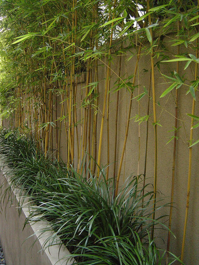 with lush bamboo screening contemporary landscape by integration design studio landscape architects chelsea garden