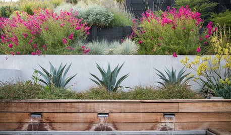 Agave Weberi's Spiky Leaves Stand Out in Drought-Tolerant Gardens