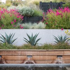 Contemporary Landscape by Envision Landscape Studio