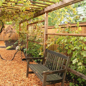 David and Terri's backyard