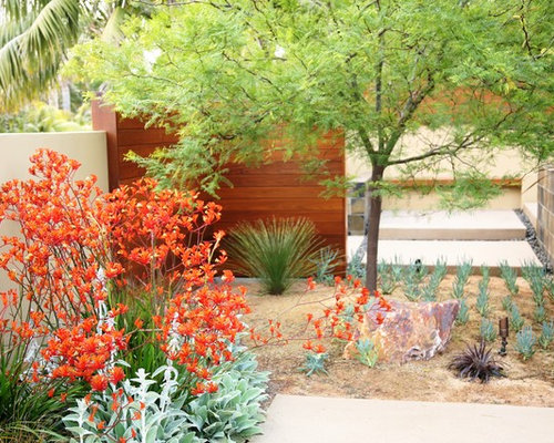 Kangaroo Paw Ideas Pictures Remodel and Decor