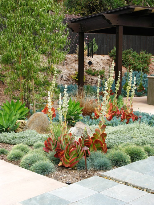best low water garden design ideas remodel pictures houzz