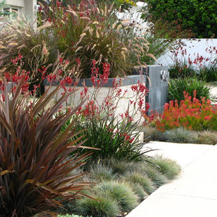 This is an example of a contemporary garden in San Diego.