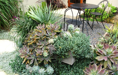 Amazingly Low-Maintenance Picks for Outdoor Planters