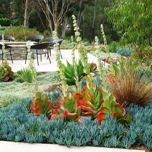 Photo of a contemporary drought-tolerant backyard landscaping in San Diego.