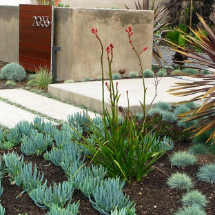 Design ideas for a contemporary drought-tolerant front yard landscaping in San Diego.