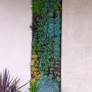 Moderner Garten mit Pflanzwand in San Diego