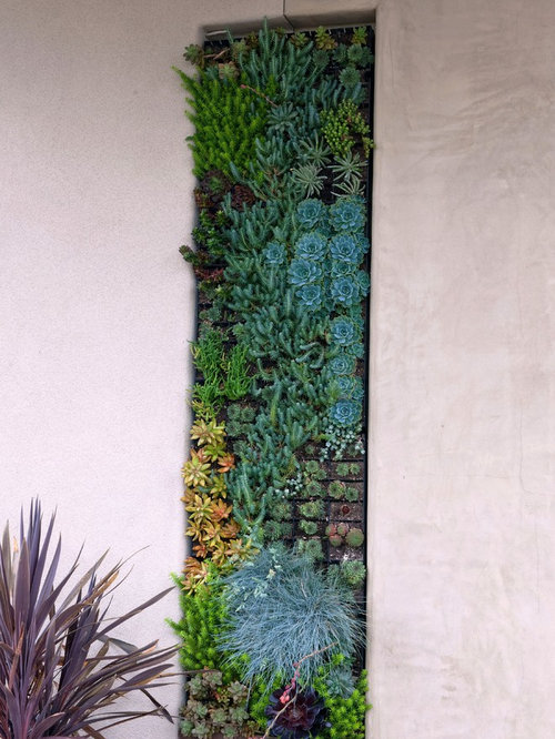 This Is An Example Of A Contemporary Garden In San Diego With A Vertical  Garden.