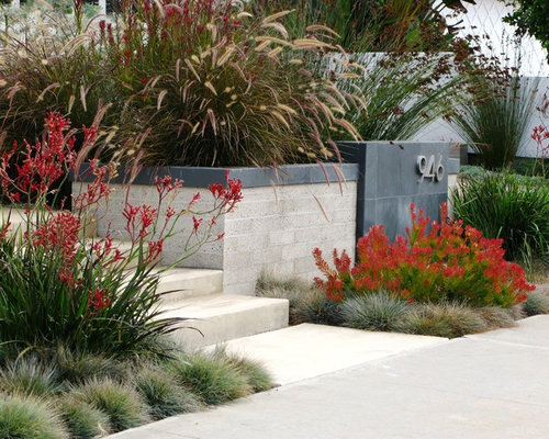 Native australian garden home design ideas renovations for Native garden designs
