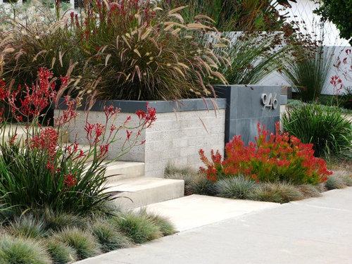 specimen tree suggestion for modern native australian garden