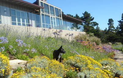 The Polite House: When the Neighbor's Dog Meets Your Landscape