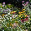 Солнцелюбивые растения для сада: 11 сценариев посадки