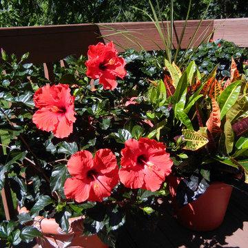 Deck and Garden flowers