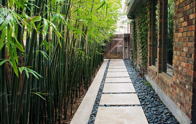 Outdoor Plant: A Guide to Growing the Golden Bamboo