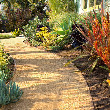Decomposed granite path with low water succulents, grasses and shrubs