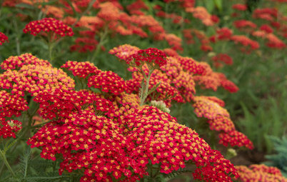 Top 12 Summer-Blooming Perennials for Deer-Resistant Drama