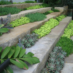 contemporary landscape by Root Design Company.com