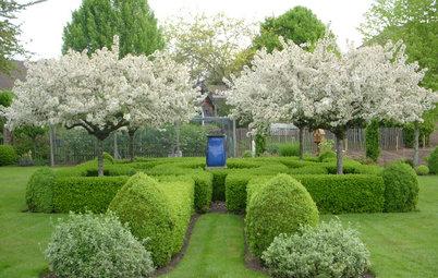 Árboles frutales: Cómo plantarlos en tu jardín