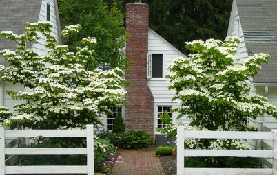 7 Deer-Resistant Flowering Trees to Plant this Fall
