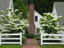 Consider this full, flowering shrub for year-round beauty in the ...