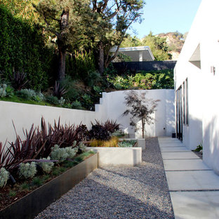 Contemporary sloped garden in Los Angeles with a potted garden and gravel.