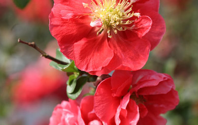 Signs of Spring: 9 Early Blooms to Look for in Your Neighborhood