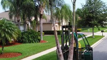 Double Trunk Foxtail Palm