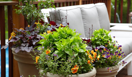 How to Plant a Container That Will Last All Winter
