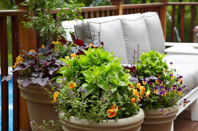 8 Knockout Flowers for a Fall Container Garden