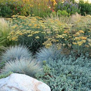 Foto di un giardino minimal esposto in pieno sole dietro casa