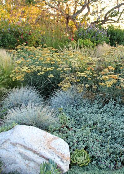 Современный Сад by Bliss Garden Design, LLC
