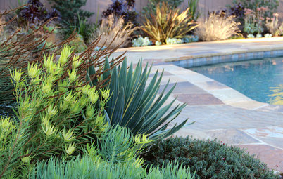 How to Design and Plant in Dry, Sunny Spots
