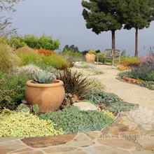 Jeannie's garden