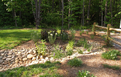 5 Steps to Selecting the Right Plants for a Rain Garden