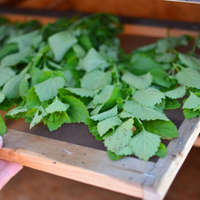 Dry Your Herbs and Enjoy the Flavor of Summer All Year