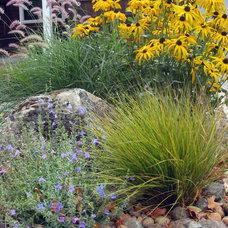Contemporary Landscape by Dig Your Garden Landscape Design