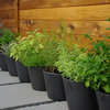 4 Herb Container Gardens for Fabulous Global Cuisine