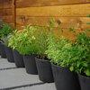 Trädgårdsexperten: Så lyckas du med din kryddodling