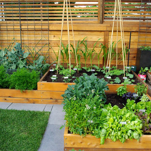 Design ideas for a contemporary vegetable garden landscape in Vancouver with decking.