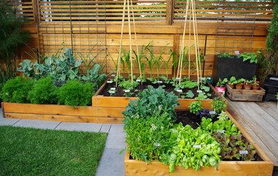 Schnecken bekämpfen im Garten – die besten Strategien