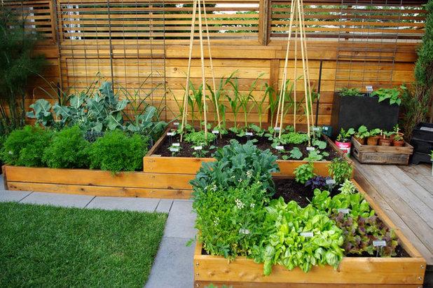 コンテンポラリー 庭 by Aloe Designs