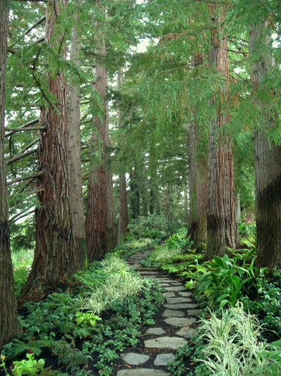 Landscaping With Redwood Trees : Traditional landscape by zeterre architecture