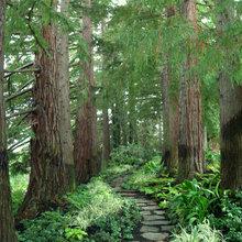 Under redwoods