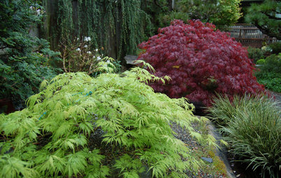 13 Japanese Maples for Shade