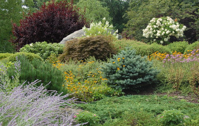 Designing With Conifers: Finding the Right Garden Bedmates