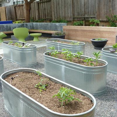 Photo of a mid-sized contemporary backyard gravel vegetable garden landscape in San Francisco.