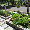 Welcome Edibles Into the Front Yard for Fresh Food and More