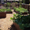 9 Ways to Be Water-Wise in the Edible Garden