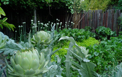 10 Ideas for an Edible Front Garden Your Neighbours Will Love