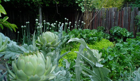 10 Ideas for a Front-Yard Edible Garden Your Neighbors Will Love